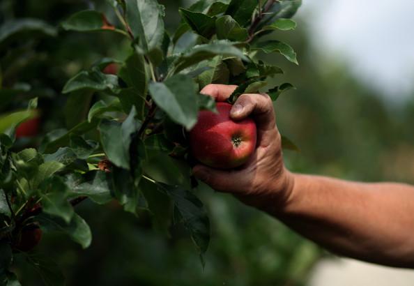Apple sector